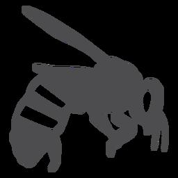 Ala de abeja ala silueta de avispa