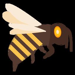 Bienenflügelstichstreifenwespe flach