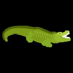 Jacaré de crocodilo cauda plana
