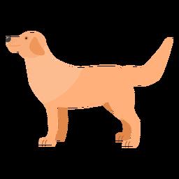 Perro cachorro oreja cola plana