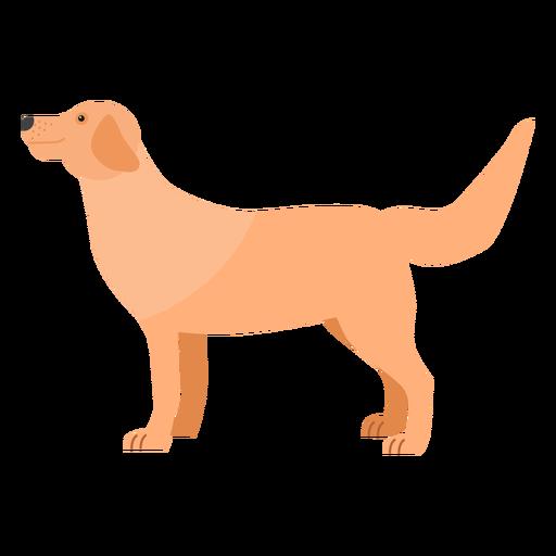 Dog puppy tail ear flat