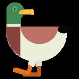 Drake duck tail wild duck beak flat rounded geometric