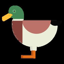 Drake Ente Wildente Schwanzschnabel flach gerundet geometrisch