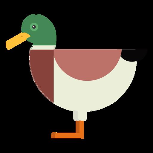 Drake duck wild duck tail beak flat rounded geometric