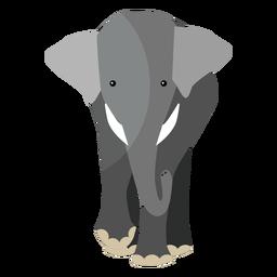 Oreja de elefante de marfil de tronco plano
