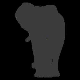 Oreja de elefante marfil tronco silueta