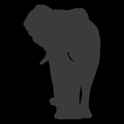 Elephant ear ivory trunk silhouette