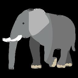 Elefantenohr Elfenbein Rumpf Schwanz flach