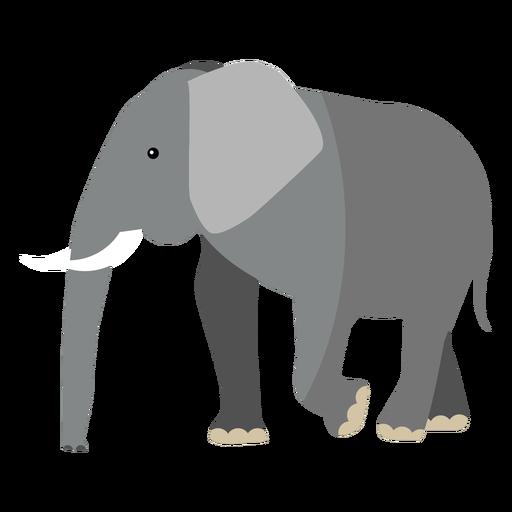 Elephant ear ivory trunk tail flat Transparent PNG