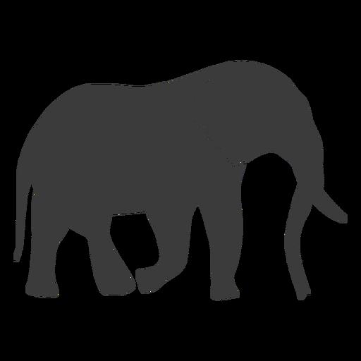 Silhueta de cauda de tronco de marfim de orelha de elefante Transparent PNG