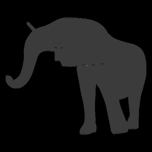 Elephant ear trunk silhouette