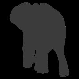 Silueta de cola de elefante