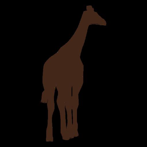 Jirafa cuello alto largo ossicones silueta animal. Transparent PNG