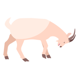 Chifre de casco de cabra plana
