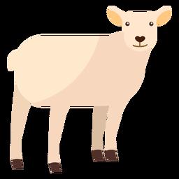Pata de cordero de lana de oveja plana