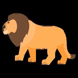 León melena rey cola plana
