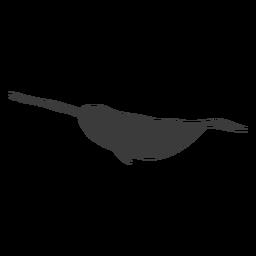 Narval aleta cola colmillo silueta