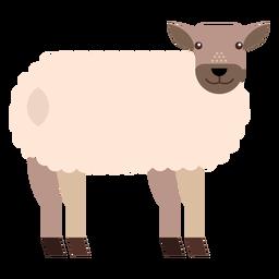 Cauda de casco de ovelha cordeiro plana arredondada geométrica