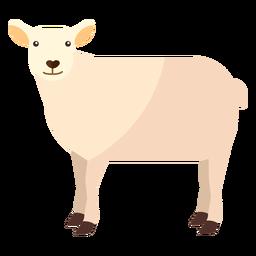 Sheep wool lamb hoof flat