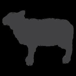 Silhueta de casco de ovelha de lã de ovelha