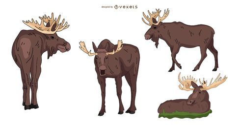 Moose Colored Illustration Set