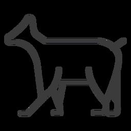 Curso de divindade de gado animal