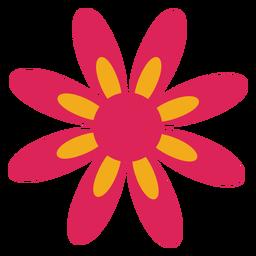 Camomila pétala de flor aster plana