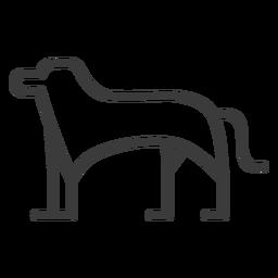 Hund Tier Bein Schwanz Göttlichkeit Schlaganfall