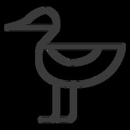 Ente Drake Schnabel Vogel Flügelschlag