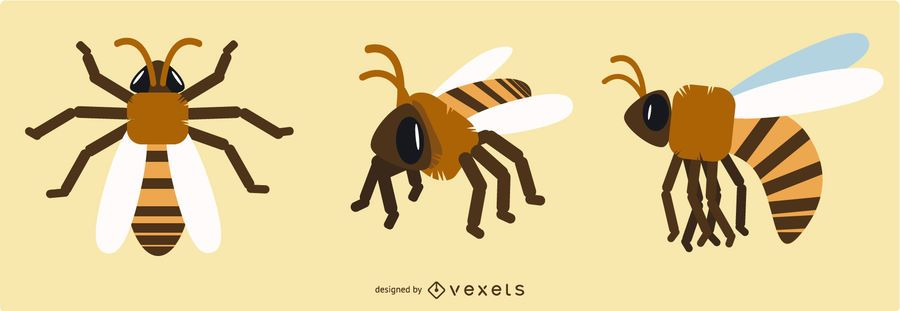 Desenhos geométricos da abelha