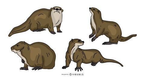 Otter Colored Illustration