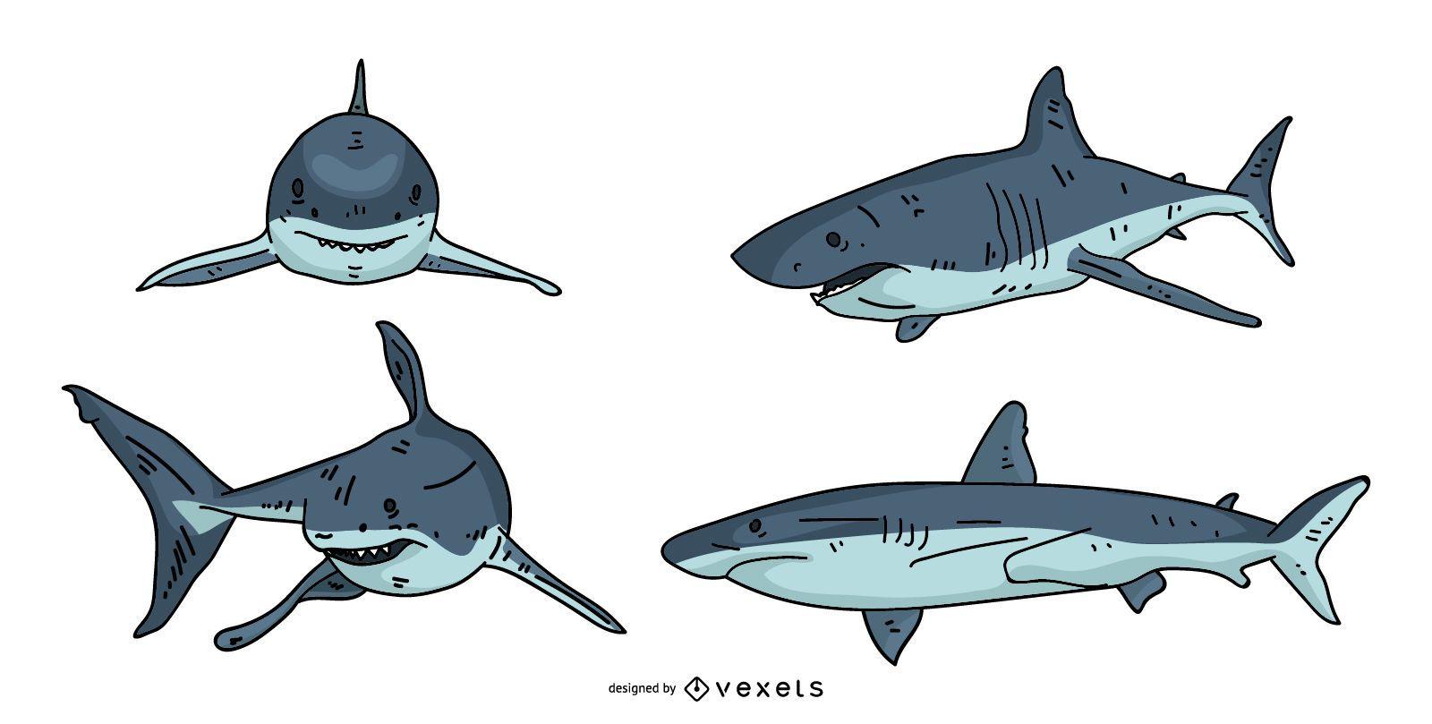 Shark Illustration Design