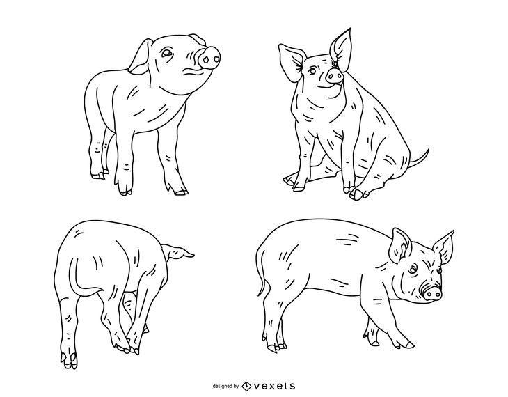 Conjunto de diseño de trazo de cerdo