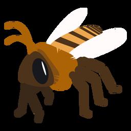 Bienenflügelstreifenwespe flach gerundet