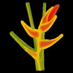 Canna flower stem bud petal flat