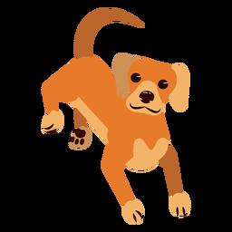 Perro cachorro oreja oreja cola redondeada plana