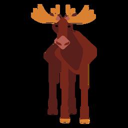 Elk moose muzzle hoof antler rounded flat
