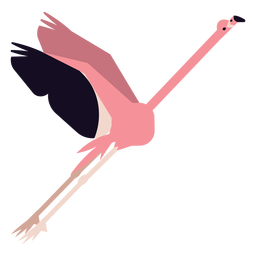 Flamingo pierna pico rosa mosca redondeada plana