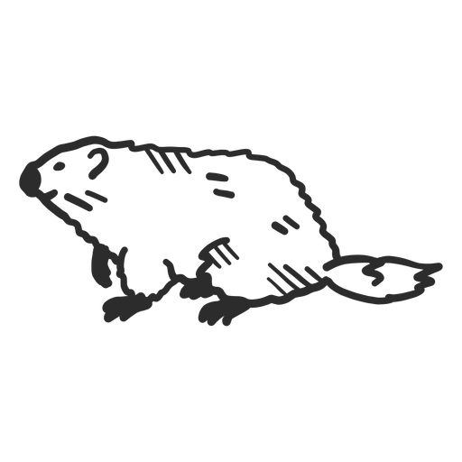 Ground hog marmot muzzle fur tail doodle Transparent PNG