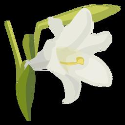 Lily flower bud petal flat