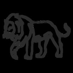 Doodle de cola de rey de melena de león