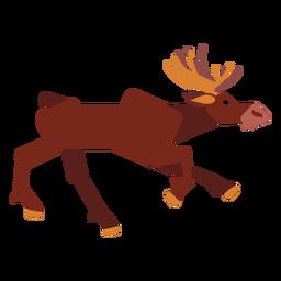 Moose elk hoof muzzle antler rounded flat
