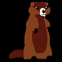 Cauda de pele de focinho de lontra arredondada plana