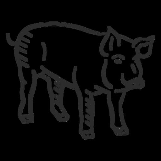Schwein Schnauze Huf Ohr Gekritzel Transparent PNG