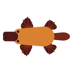 Besouro de bico ornitorrinco bico arredondado plana