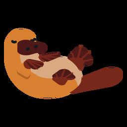 Besouro de ornitorrinco bico de cauda arredondada plana