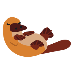 Platypus duckbill muzzle tail beak rounded flat
