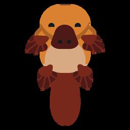 Besouro de bico de ornitorrinco bico focinho arredondado