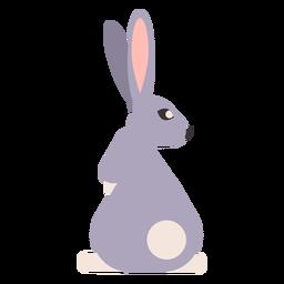 Coelho coelho focinho cauda arredondada plana