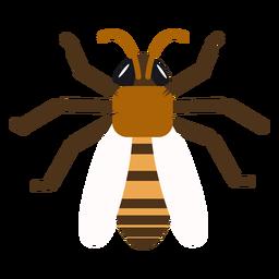 Avispa abeja raya ala redondeada plana